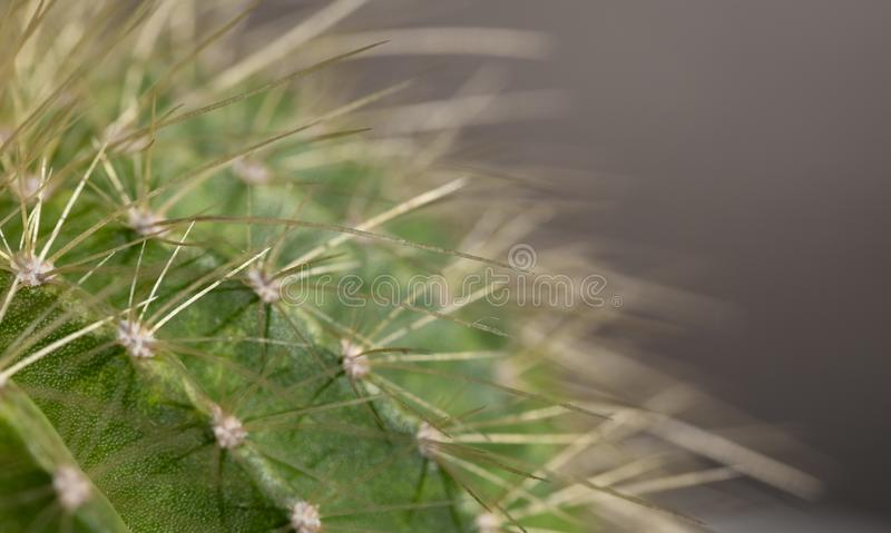 Macro image of a cactus stock images