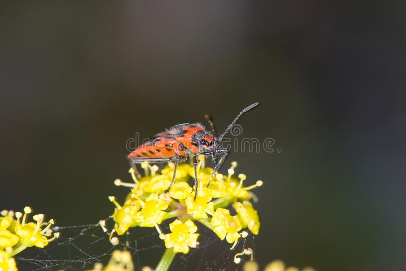 Macro image of colorful insect on yellow plant royalty free stock photography