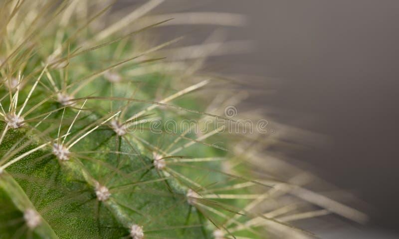 Macro image d'un cactus images stock