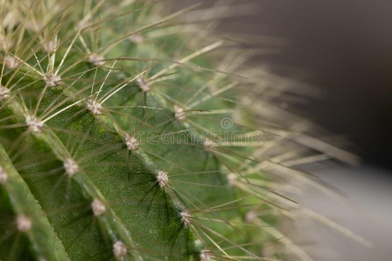 Macro image d'un cactus photo stock