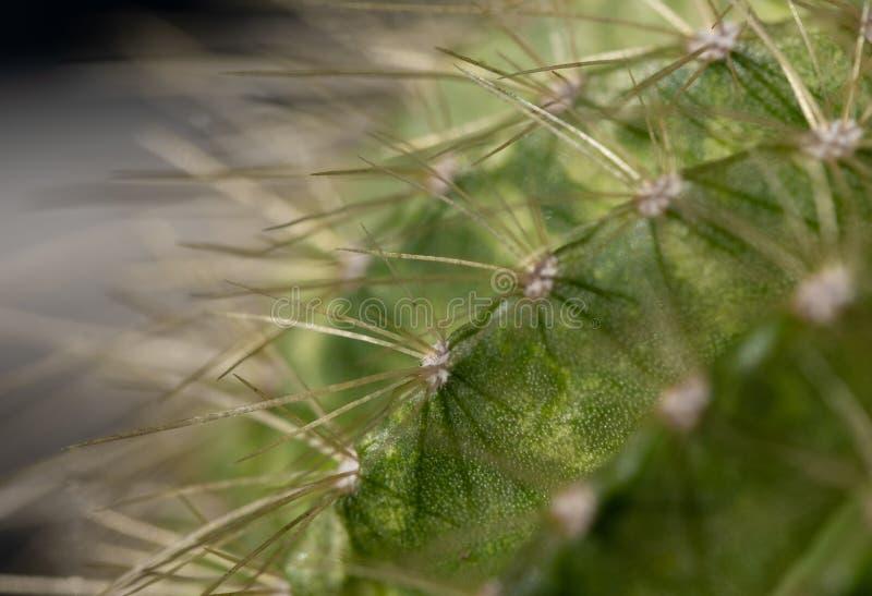 Macro image d'un cactus images libres de droits