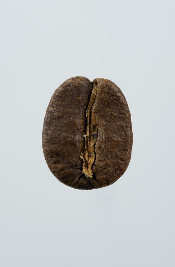 Macro image d'un grain de café images stock