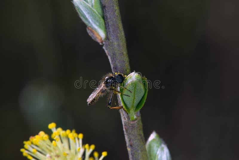 Macro image d'une petite mouche sur le bouton de feuille images libres de droits
