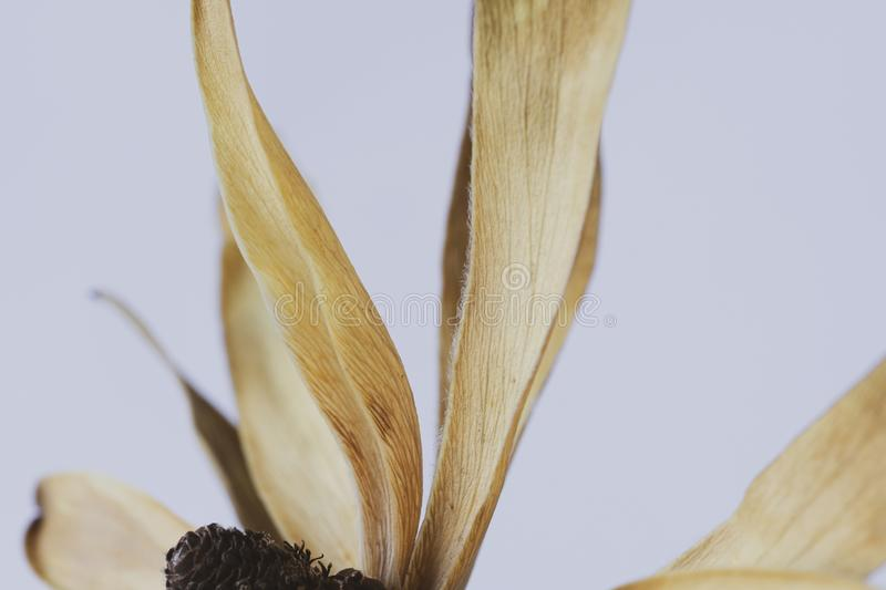 Macro image of a dried flower head royalty free stock photography