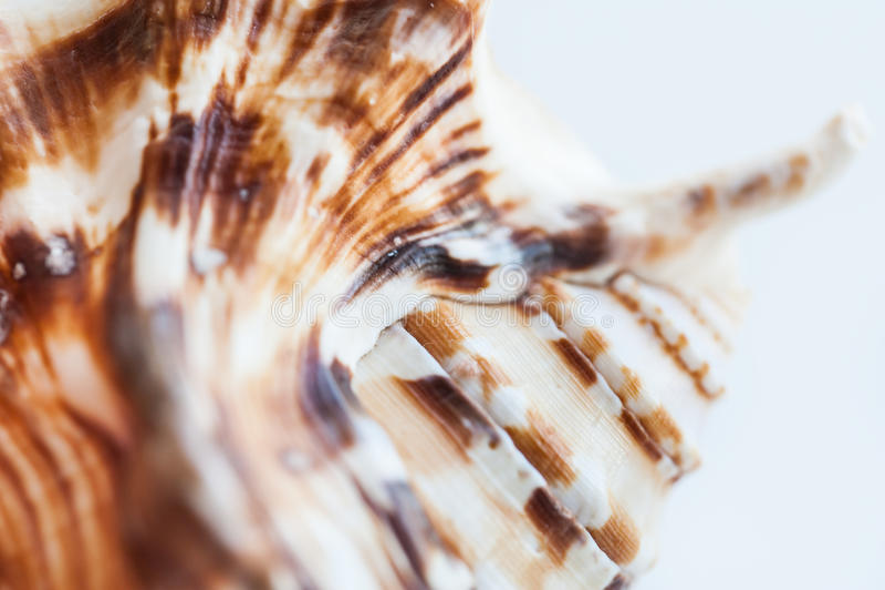 Macro image of sea shell royalty free stock images