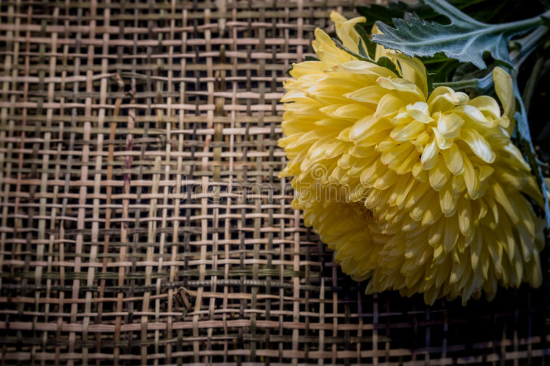 Macro image and vintage style of beautiful fresh yellow chrysanthemum on wood weave. Copy space texture background stock photos