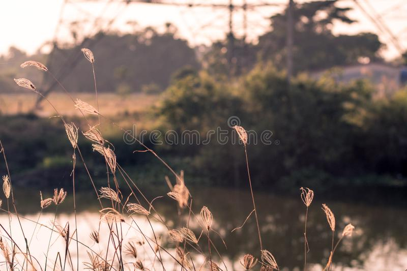 Macro image of wild grasses, small depth of field. Vintage effect. Beautiful rural nature Wild grasses at golden summer sunset.  royalty free stock images