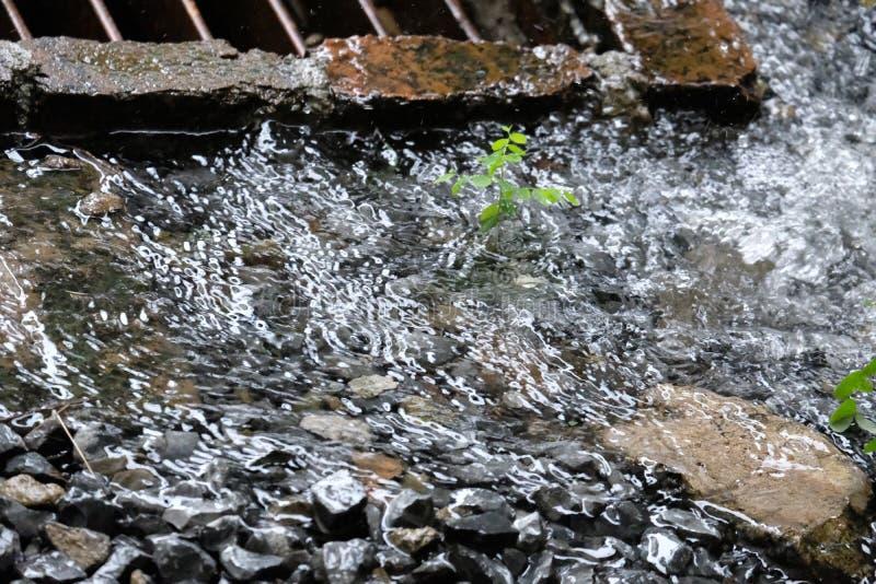macro images de tir de la pluie se renversant  photo libre de droits