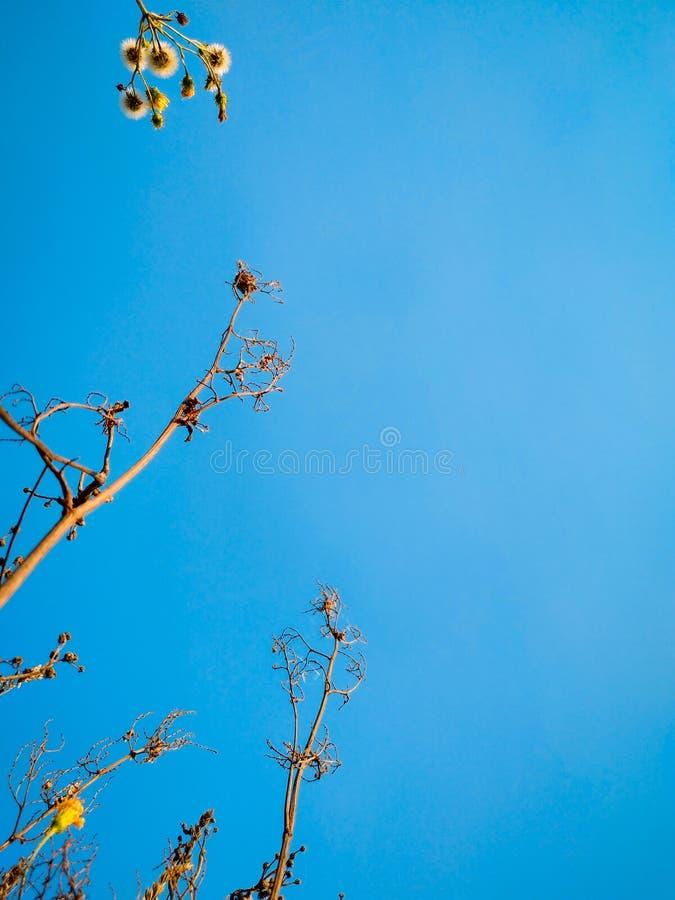 Macro immagine delle erbe selvatiche al fondo del cielo blu immagini stock