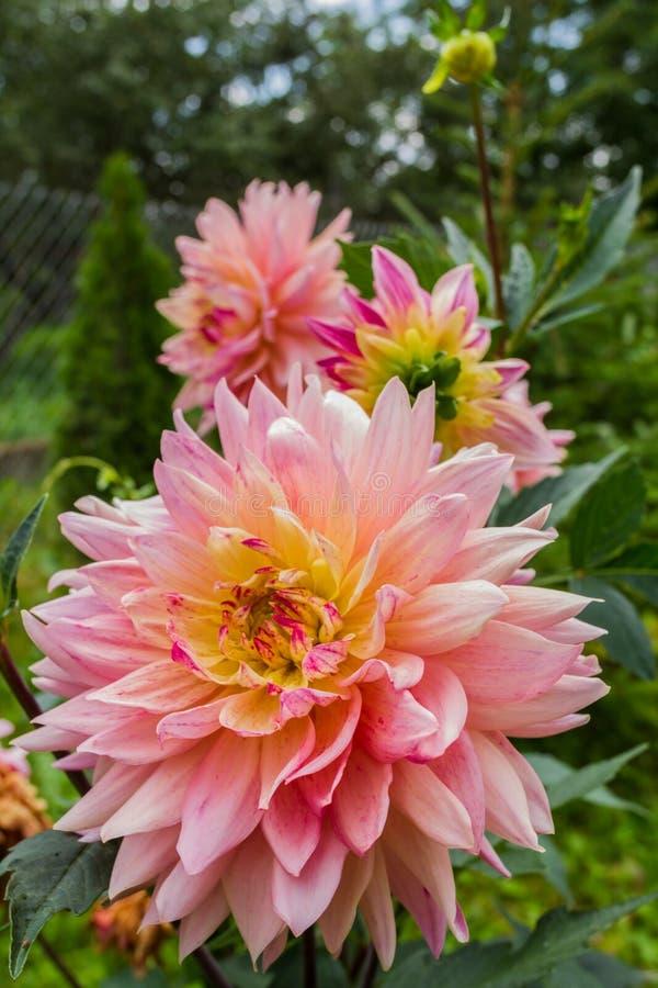 Macro immagine molle di bello fiore Fuoco sulla parte anteriore fotografia stock