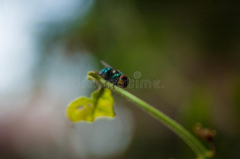 Macro insect stock photography