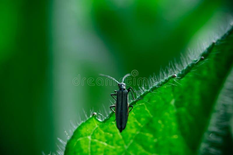 Macro insecte d'insecte de photo photographie stock libre de droits