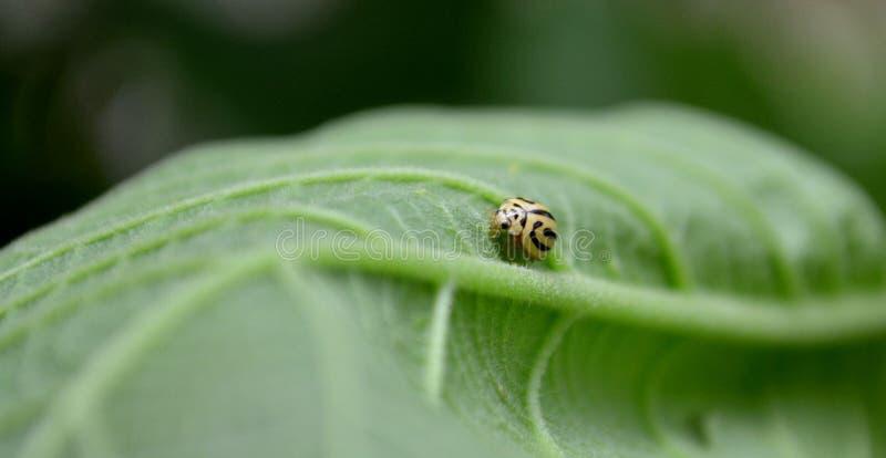 Macro insetto fotografie stock libere da diritti