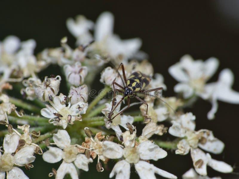 Macro kleine vlieg op een installatie in de tuin foto genomen int. hij het UK stock foto's