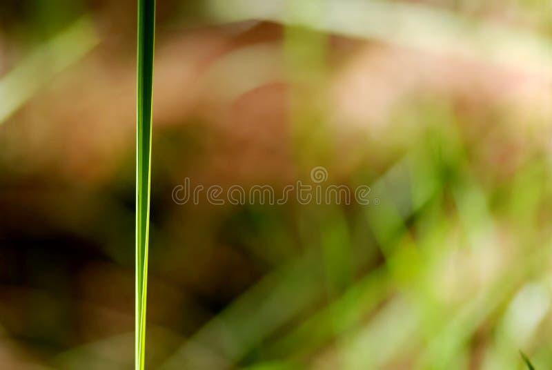 Macro lame d'herbe photos stock