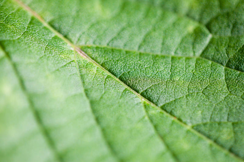 Download Macro leaf stock image. Image of sunlight, green, natural - 26797329