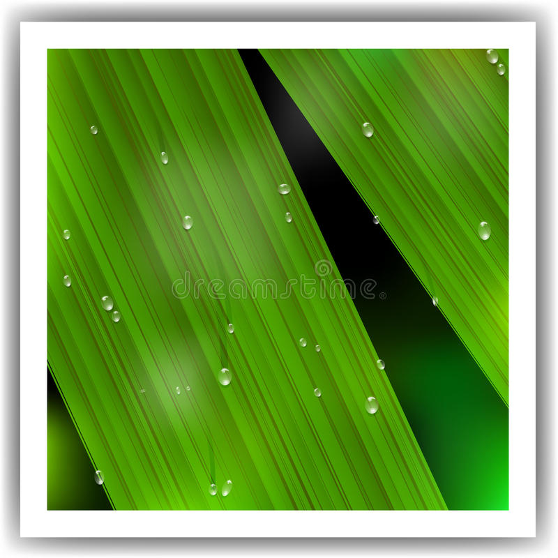 Macro Leaf with droplets. Vector illustration stock illustration