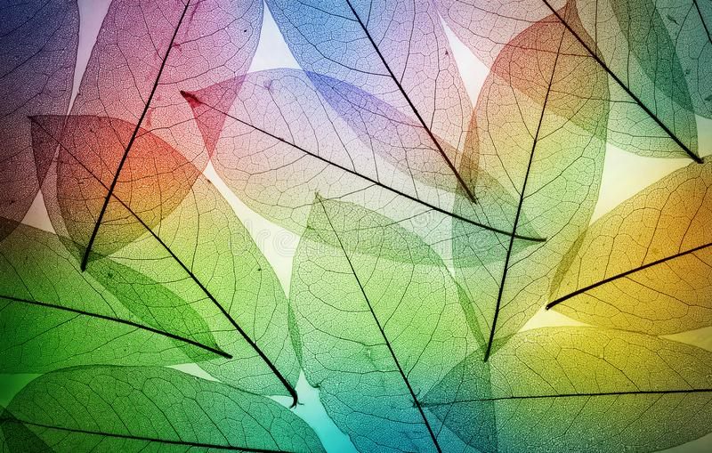 Macro leaves background texture. stock images