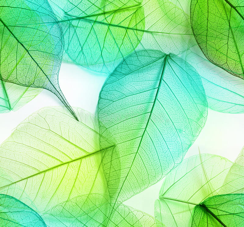 Download Macro Leaves Seamless Texture Stock Image - Image: 47595731