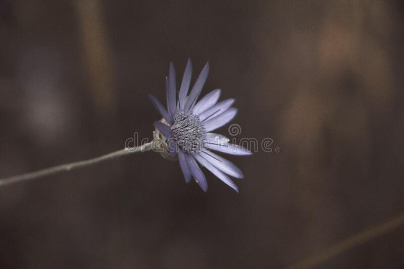 Macro Lens Photo Showing Purple Flower royalty free stock image