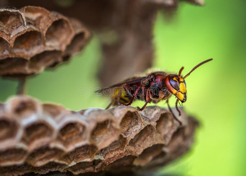 Macro Lens Photography of Yellow and Red Bee royalty free stock photography