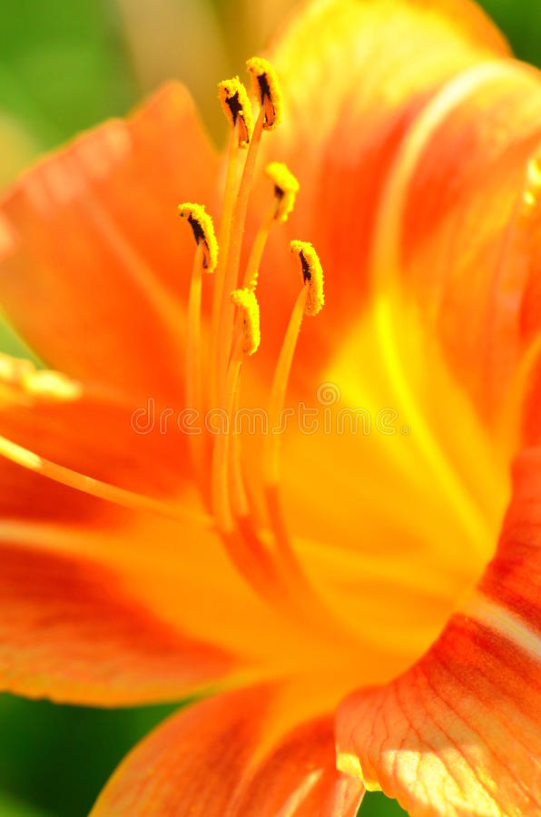 Free Macro Lilly - Flower Close Up Details Stock Images - 20041744