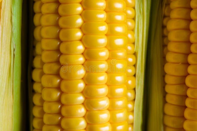 Macro mûr d'or de maïs de trois épis de blé photographie stock