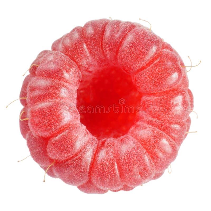 Macro madura de las frambuesas rojas aislada en blanco imágenes de archivo libres de regalías