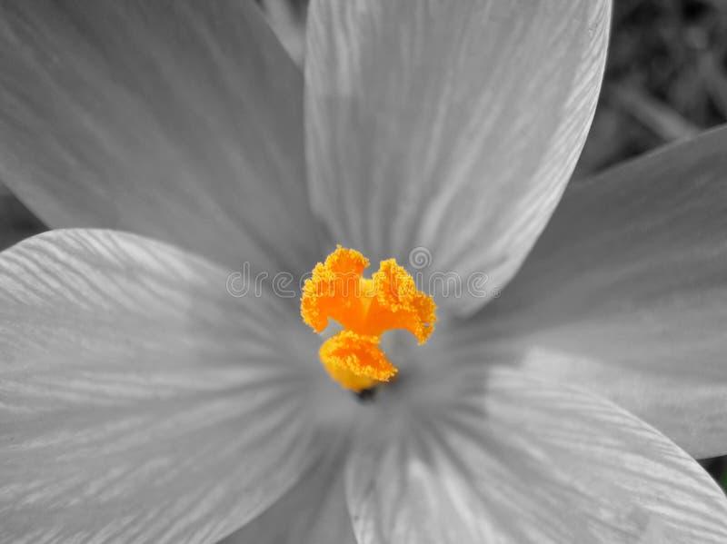 Macro monde floral photographie stock libre de droits