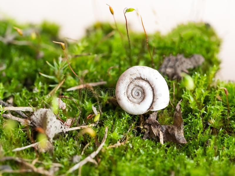 Macro of mossy forest floor royalty free stock images