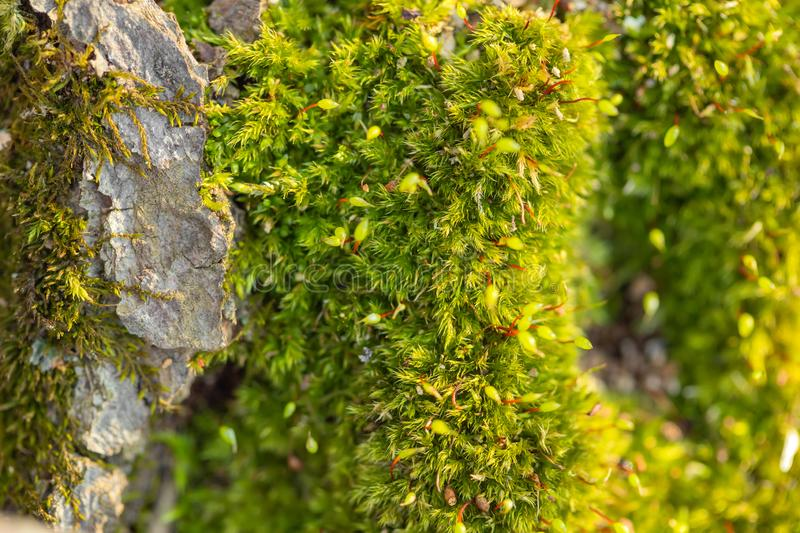 Macro of mossy forest floor in nature royalty free stock photos