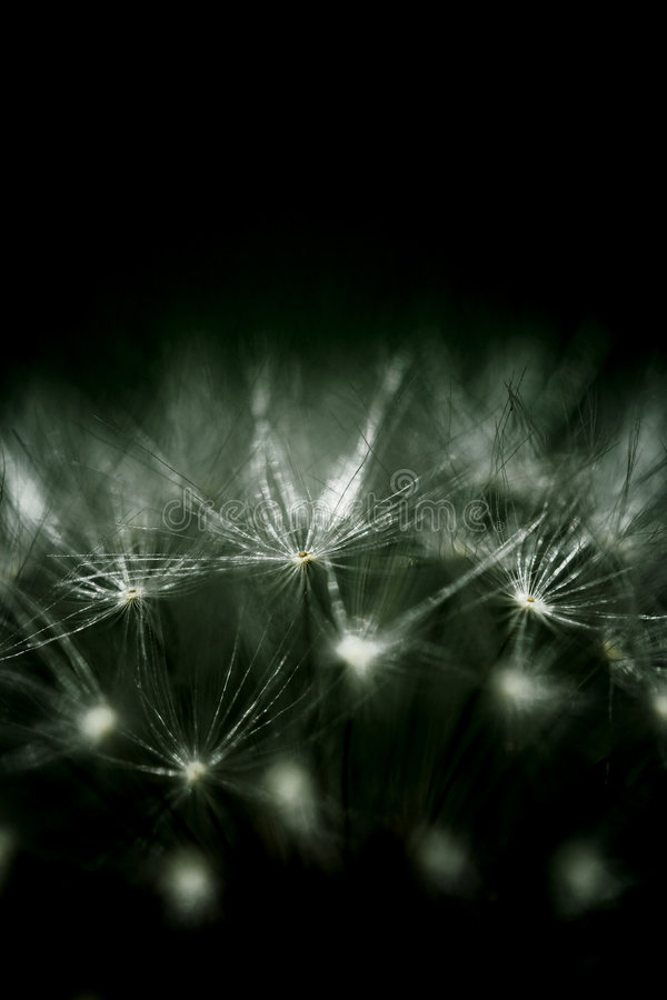 Download Macro Nature stock photo. Image of glowing, sparkle, nobody - 8236630