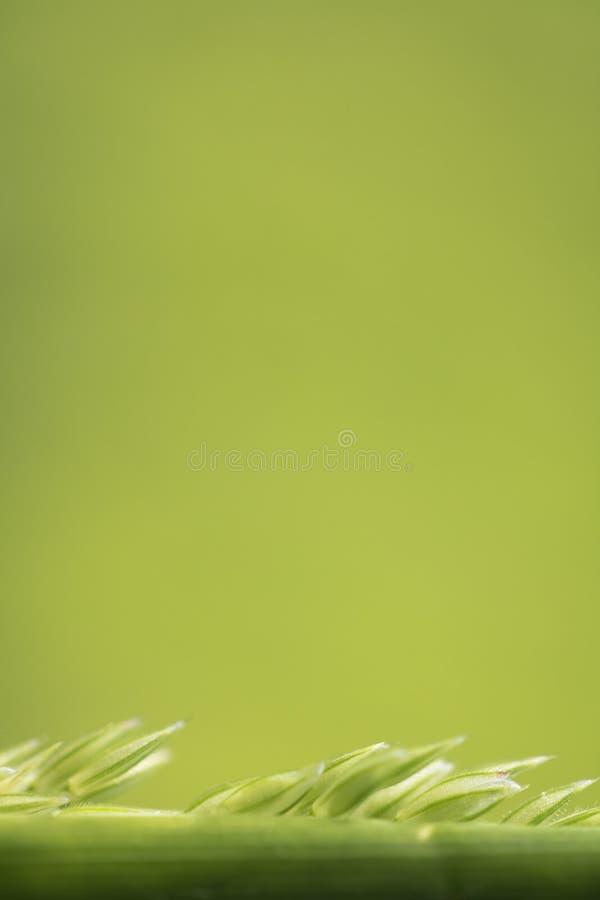 Macro nature - fermez-vous de l'herbe d'herbe de sarclage à l'arrière-plan brouillé images libres de droits