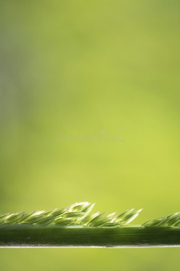Macro nature - fermez-vous de l'herbe d'herbe de sarclage à l'arrière-plan brouillé photo stock