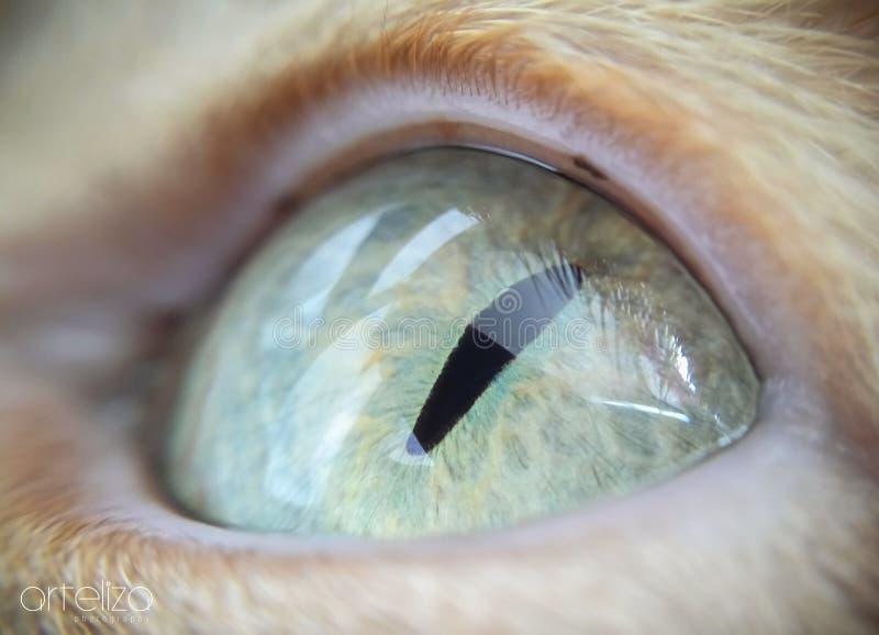 Macro occhio di gatto verde fotografia stock
