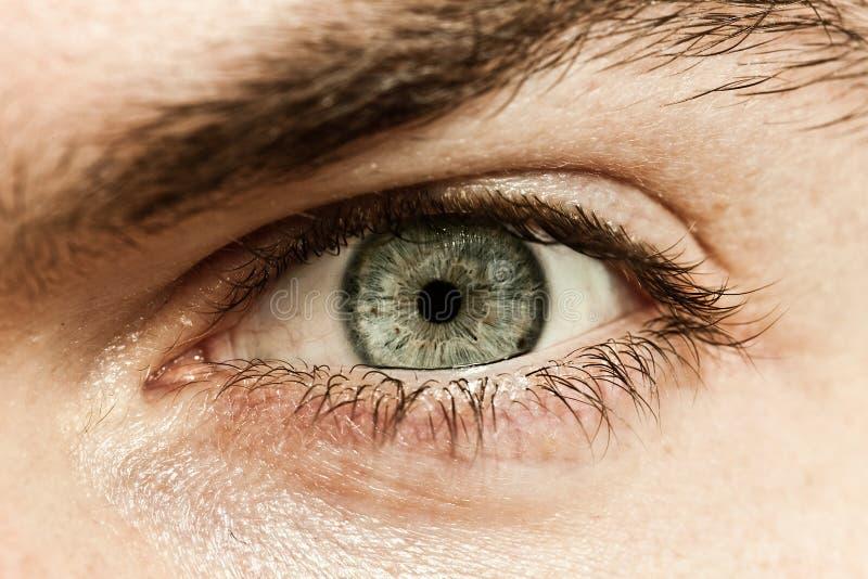 Macro oeil mâle photographie stock libre de droits