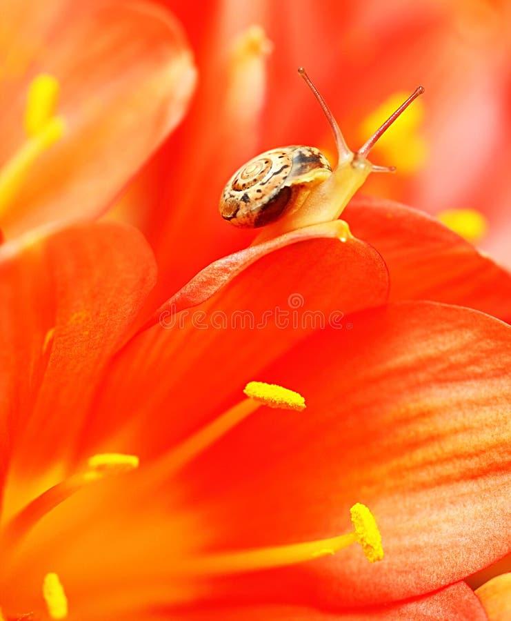 Free Macro On Snail Royalty Free Stock Photo - 23760175