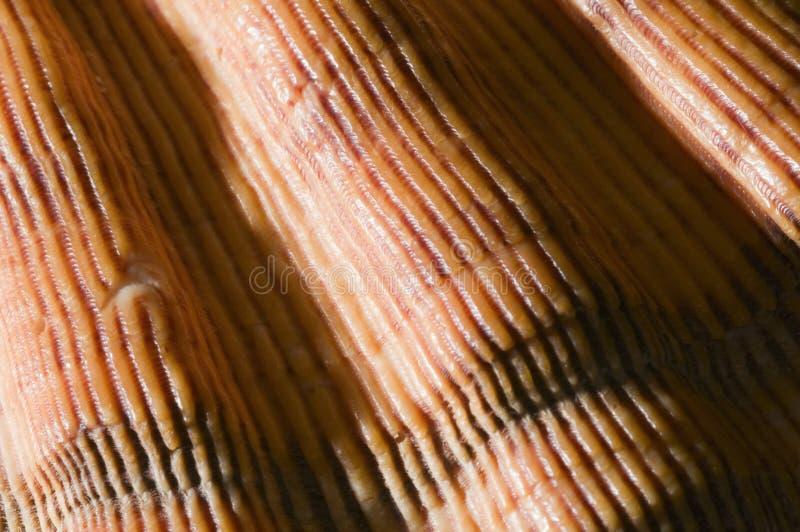 Macro of orange shell near. Close-up of a orange shell surface royalty free stock photography