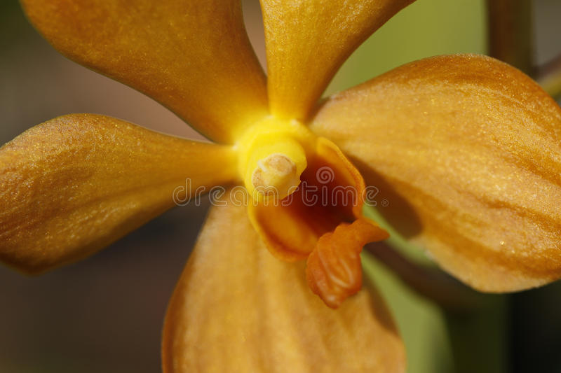 Macro of orchid. A macro shot of a small orchid blossom stock image