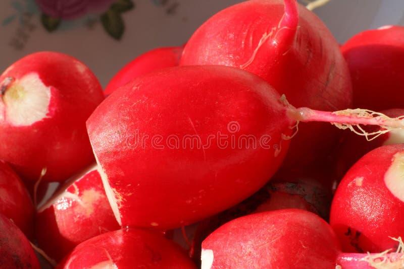 Download Macro Of Peeled Moist Radishes Stock Photos - Image: 934023