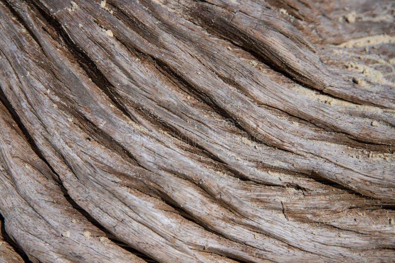 Macro photo âgée de texture en bois Bois de construction gris avec les fissures superficielles par les agents Fond naturel Contex images libres de droits