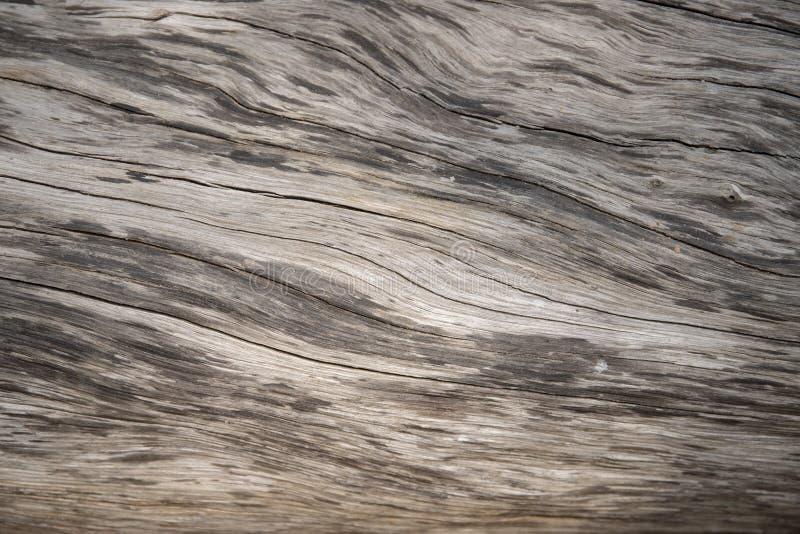 Macro photo âgée de texture en bois Bois de construction gris avec les fissures superficielles par les agents Fond naturel pour l photo libre de droits