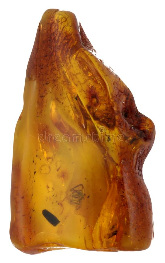 Macro photo of amber with insect fossils isolated on white stock images