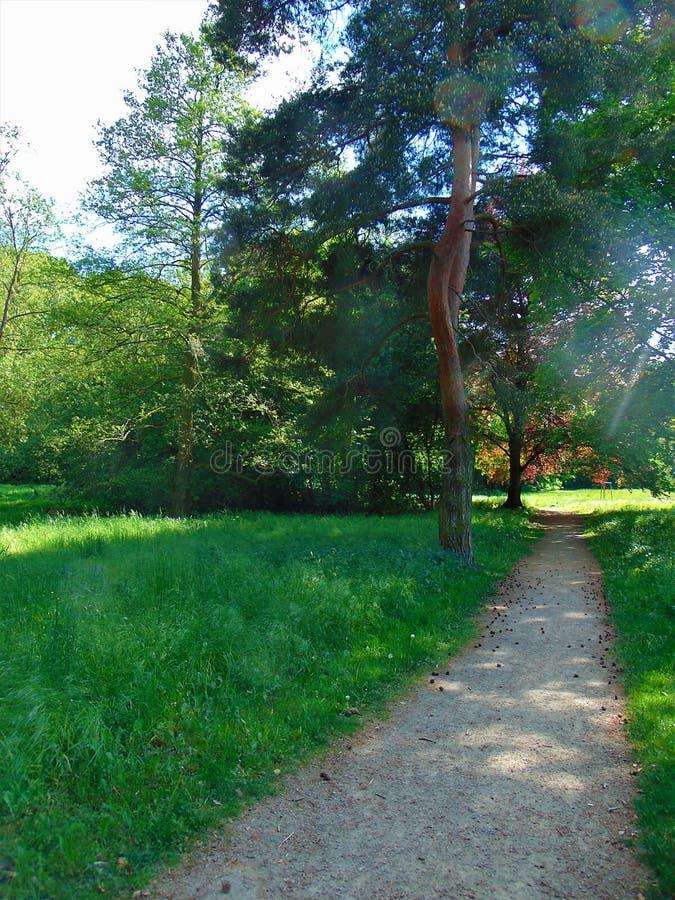 Macro photo avec le fond décoratif d'un beau chemin d'été avec les arbres antiques à la lumière du soleil en parc européen photographie stock libre de droits