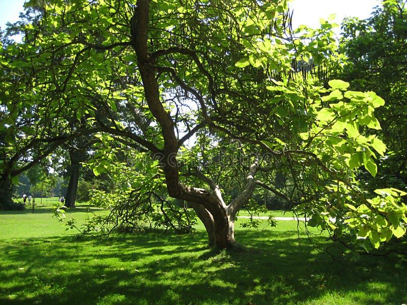 Macro photo avec le fond décoratif de paysage du jour ensoleillé d'été en vieux parc historique de San Susi à Potsdam images stock