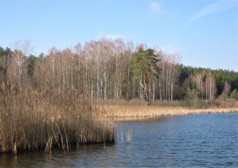 Macro photo avec le fond décoratif du paysage de ressort sur le rivage d'un beau lac naturel dans la région de la Lithuanie photographie stock libre de droits