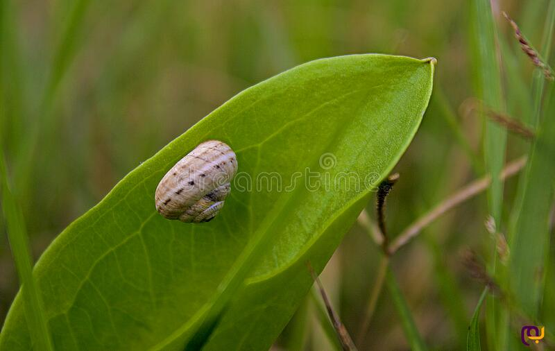 Download Macro Photo Of Brown Snail On Green Leaf Stock Photo - Image of stock, nature: 83018972
