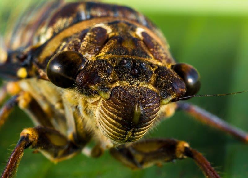 Macro Photo Of Bug On Leaf Free Public Domain Cc0 Image