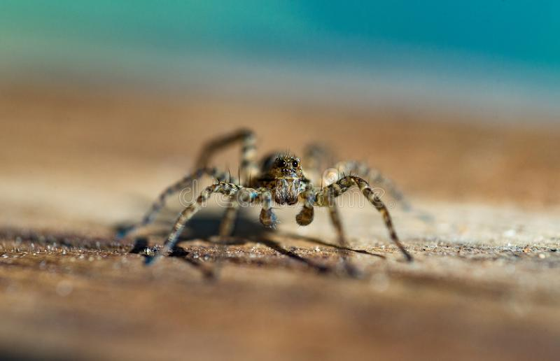 Macro photo d'araignée photos libres de droits