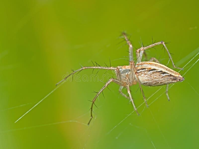 Macro photo d'araign?e sur le Web sur le fond de nature, foyer s?lectif image stock